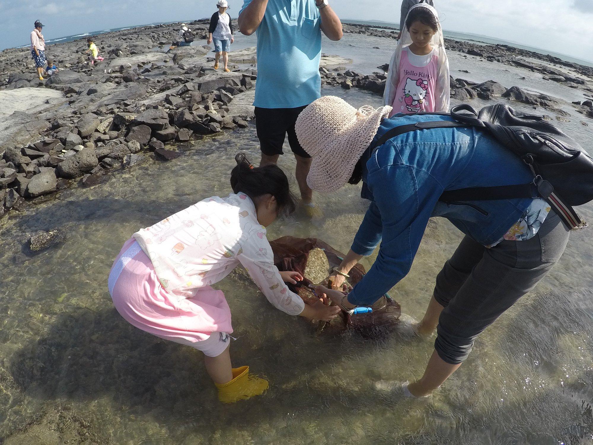 銀海遊艇-東海生態之旅